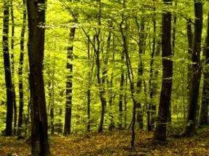 deep-forest--trees_19-106179