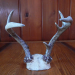 6 point antlers cropped