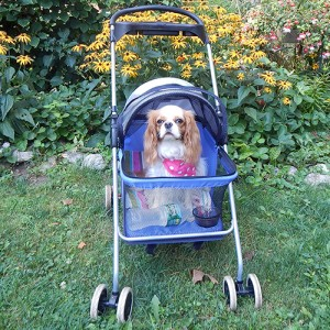 Lola in Cart cropped 3