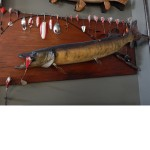 muskie mounting cropped