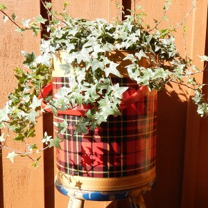 plaid cooler with plant
